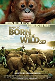 Born to Be Wild 2011 dvd